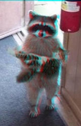 3D Raccoon and Kitty